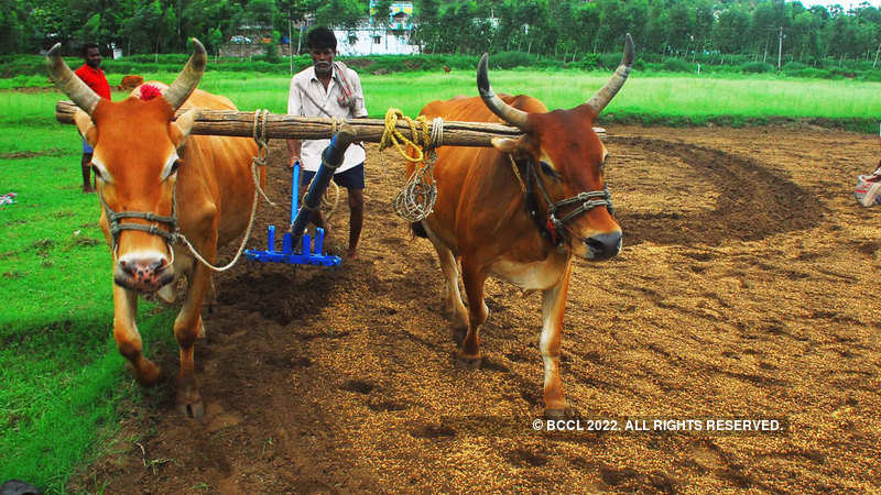View: Empowering farmers is important - The Economic Times