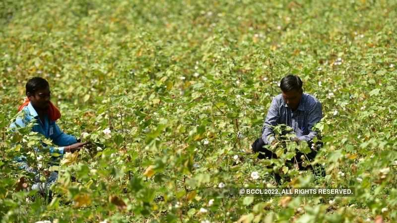 Cotton Association of India maintains cotton output at 312