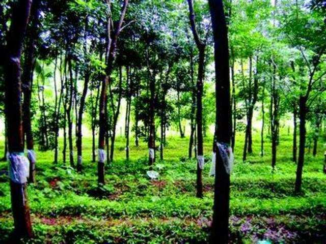 Apply safeguard duty to protect million of rubber growers' - The