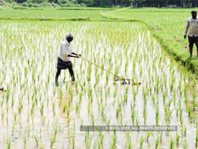 PM-KISAN to provide multiple benefits to farmers: CEA - The Economic
