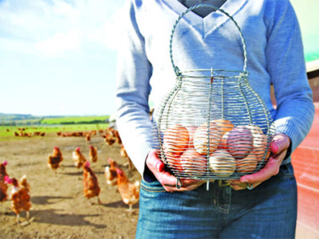 How cage-free eggs are more nutritious than regular able eggs