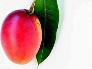 India needs to focus on quality of Mangoes to expand to new markets