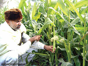 Innovative farmer: Meet the father of baby corn in Sonipat