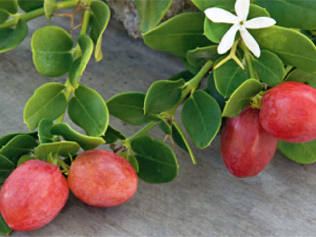 Summer brings astringently delicious karonda, a fruit that's ripe for pickling