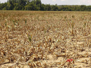Dying monsoon to shoot up prices of farm products