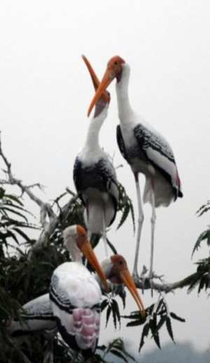 Concerned at the diminishing number of Siberian cranes in Sultanpur, the wildlife department is now planning to develop another water body in the bird sanctuary.