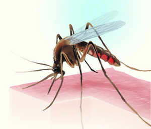 climate change and global warming will make vector-borne diseases like dengue and malaria in the country more lethal.