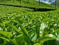 Tea Board of India has now decided to promote Indian tea in tier-II cities of Iran.