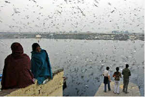 The number of the migratory birds at the Hirakud dam reservoir was 60,806 in the last season. Around 52 kinds of species had arrived last year.