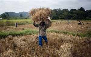 Prime Minister Manmohan Singh today emphasised on the need to shift large surplus farmers to non-agriculture sector, saying per capita income of farmers would rise only when fewer people engage in farming.