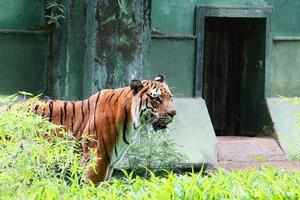 """The report said, """"This finding is also consistent with an examination of leopard seizures in which Delhi also emerged as the most important hub of illegal trade the country."""""""