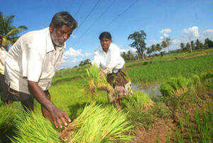 Farm waiver scam: Finance Ministry says banks fully into the job