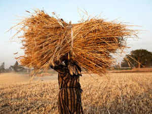 """The """"incremental"""" food subsidy over and above the existing subsidy is estimated at Rs 23,951 crore, or 0.2 per cent of GDP in 2013-14."""