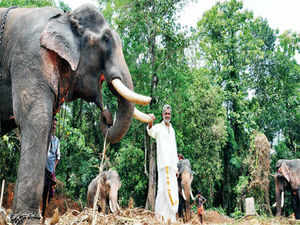 The 14 elephants of Angadiyil House have become household names in north & central Kerala. More than profit, it is the sheer passion for these animals that has driven Haridas and Parameswaran to own so many elephants.