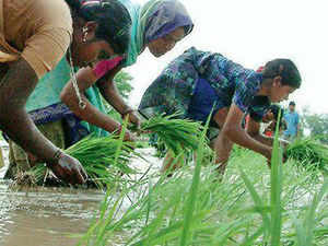 CCEA may consider hike in paddy MSP by Rs 60/qtl tomorrow