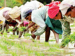 After receiving a 32% above-average rainfall in June, the country is likely to get good rainfall in July too.