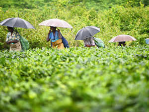 Rupee devaluation has prodded Darjeeling tea producers to step up exports and shift the focus from domestic market to global markets.