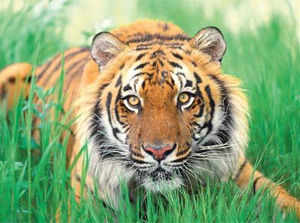 China reached an agreement with India at a meeting in Kunming city to work on protecting tiger habitats and combat illegal wildlife trade.