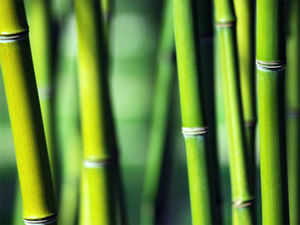 Now, even bamboo sticks a scarce resource: Agarbatti makers forced