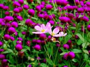 Floriculture which is fast emerging as vibrant sector in bio diversity hot spot of Northeast India is heavily dependent on imported planting materials.