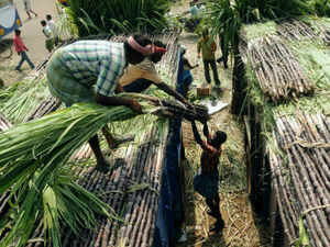 In sugarcane the area is expected to decline by 15.88 per cent and production by 14.61 per cent.