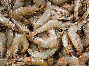 """The United States International Trade Commission (USITC) has said that the US industry is """"neither materially injured nor threatened with material injury"""" by reason of imports of frozen warm water shrimp from countries including India, China, Ecuador, Malaysia, and Vietnam."""