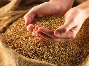 The government may tomorrow raise the minimum support price (MSP) for wheat by Rs 100 to Rs 1,450 per quintal to encourage farmers to cover more area under the crop in the ongoing rabi season, sources said.