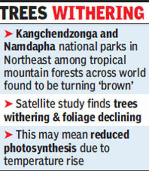 East Himalayan forests turning brown: Study