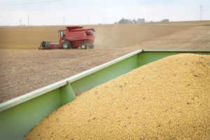 As per the Ministry of Agriculture the acreage under oilseeds as on 17th October, 2013 estimated at 194.94 lakh hectares against 177.66 lakh hectares last year, up by 17.28 lakh hectares.