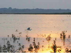 Several rivers including Vamsasadhara and Bahuda in north coastal Andhra and rivulets were in spate at many other places.