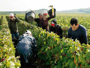 Indian wineries, like their Californian counterparts, are investing heavily in setting up the infrastructure to develop the vineyards as tourist destinations.