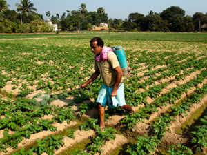 """""""This huge crop loss could be attributed to low pesticide consumption in India,"""" said the joint study by industry body Assocham and Yes Bank."""