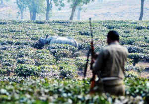 Worldwide, there has been a rise in the killing of rhinos primarily because of the soaring demand for its horn.