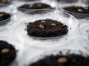 The Indian hybrid seed market, with over 300 companies, has been growing at 15-20 per cent annually over the past several years and is projected to reach aroundRs18,000croreby 2018.