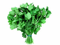 Coriander rose toRs9,078 per quintal in futures trade as speculators enlarged their positions supported by rising demand in the spot markets.