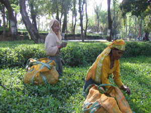 CISTA, apex body of Indian small tea growers, will organise India International Small Tea Growers Conference at Tea Auction Centre, Jalpaiguri, West Bengal.