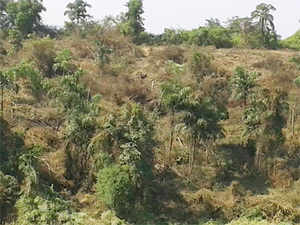 Ahead of the Lok Sabha polls, UPA government has decided to push a Rs  46000 crore ambitious mission to increase forest cover in the country