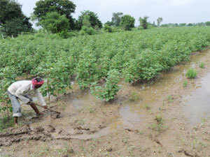 The government on Wednesday made its intention clear by announcing that it does not have any reservation against transgenic crop.