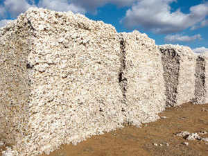 The world's second biggest cotton producer had exported 7.4 million bales during the August-February period of the 2012-13 marketing year (August-July).
