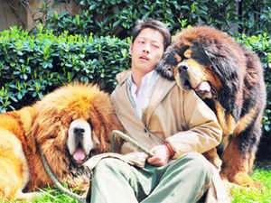 A Tibetan mastiff puppy has been sold in China for almost US $ 2 million, a report said today, in what could be the most expensive dog sale ever.