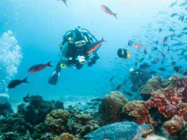 Imagine living the life of Nemo, a celebrated orangy clown fish.