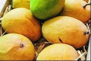 If El Niño leads to deficient monsoons, a bumper consignment of mangoes in local markets courtesy the EU ban would certainly impart seasonal cheer.