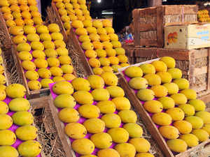 UK imports around 6.3-million pounds worth of Indian mangoes per year out of a UK mango market worth 68 million pounds in total.