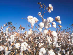 Though the demand of cotton yarn in domestic market is showing some recovery but the textile mills say that the robust growth is yet to be felt.