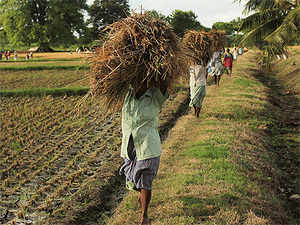 Dealing with the monsoon situation in the kharif cropping season will be top of the agenda for the new government that takes over after votes are counted on May 16.