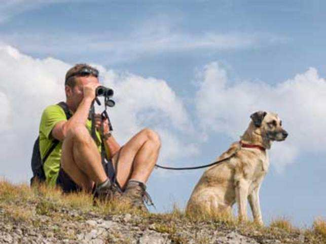 Here's how you can enjoy a pet vacation this season in the lush hills, beaches or farms with handy tips from experts.