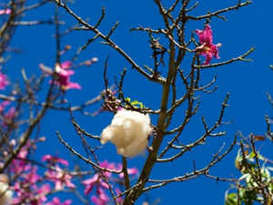Country's cotton yarn exports for 2013-14 are expected to be around 1,350 million kgs valued at USD 4.70 billion.