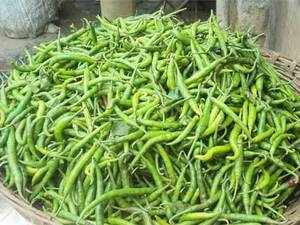 Saudi red flag on Indian green chilli unlikely to hurt red chilli shipments 5071303818
