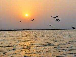 TheCAGreport says that no state has identified species at risk due to river pollution. And only seven have studied the risks to human health arising from river pollution.