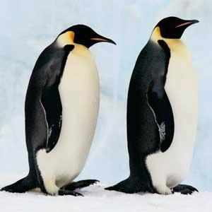 The 'March of the Penguins' colony is called Pointe Geologie and it has been studied for over 60 years